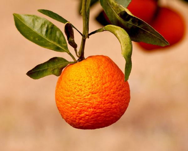 Fashion week Diy fruit citrus beauty recipes for lady